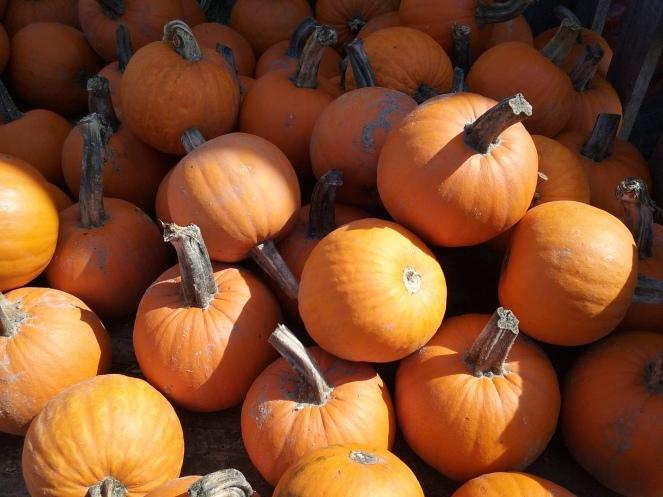 Thanksgiving Memories & Traditions @godschicki